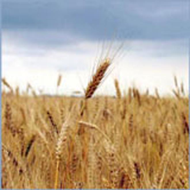 Kazakhstan plans to export grain to Black and Baltic Sea regions