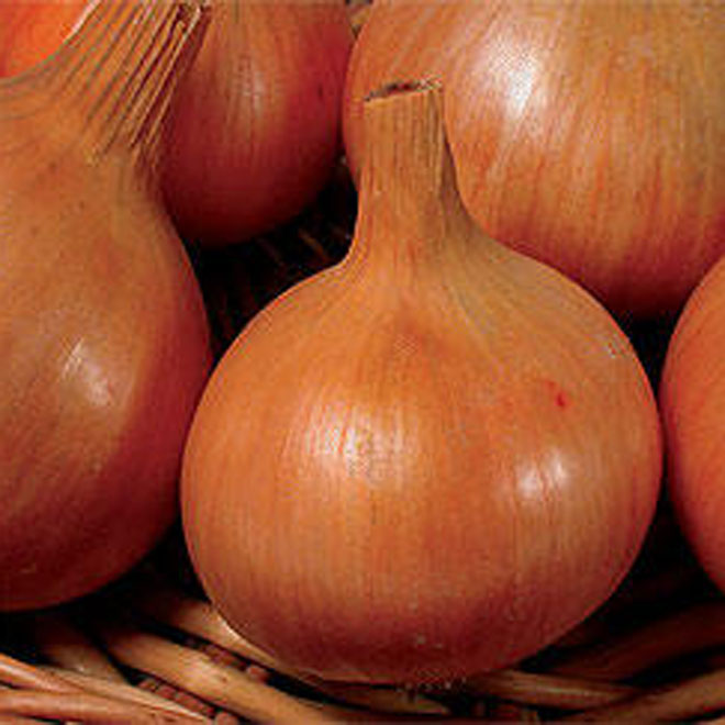 India to import 11,000 tonnes of onions from Turkey amid rising prices