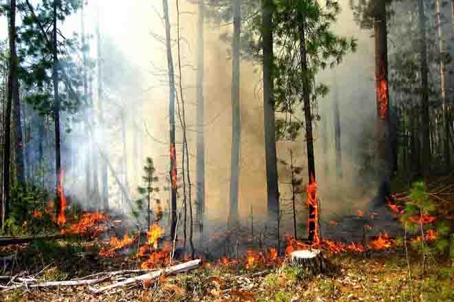 Режим чрезвычайной ситуации объявлен в Калифорнии в связи с лесными пожарами