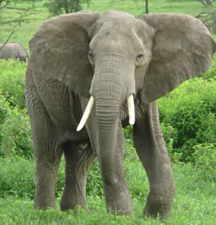 Elephant tramples American woman and daughter to death in Kenya