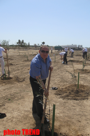Minister: Eight million trees planted in Azerbaijan (PHOTO) - Gallery Image