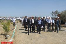 В Азербайджане посажено 8 миллионов деревьев - министр (ФОТО) - Gallery Thumbnail
