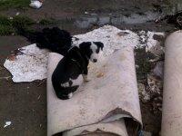 Из-за жесткого обращения с животными в Азербайджане можно будет попасть за решетку (фотосессия) - Gallery Thumbnail