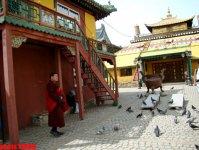 Уникальная Монголия: дорогой кашемир, пятизвездочная юрта, чай с салом, буддийский Гандан…(фотосессия, часть 2) - Gallery Thumbnail