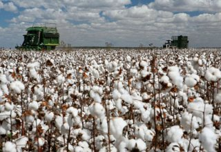 Uzbekistan to produce new generation cotton pickers-transformers