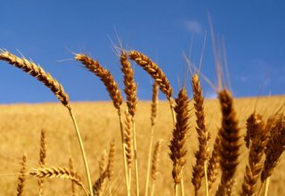 Georgia decreases import of wheat and meslin from Russia