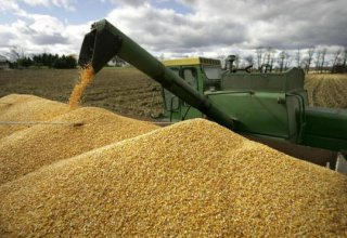 Kazakhstan's grain export volume revealed