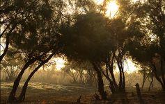 Araz çayının füsunkar təbiəti (FOTO) - Gallery Thumbnail