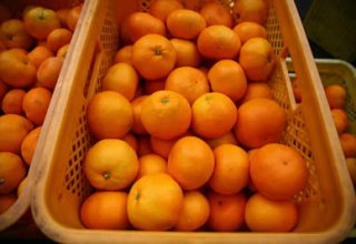 Georgia reveals volume of exported tangerines