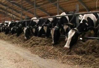 Azerbaijan launches new project in livestock sector
