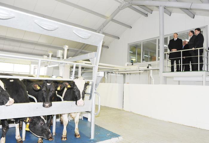 Президент Азербайджана принял участие в открытии Габалинского молочно-животноводческого комплекса (ФОТО) - Gallery Image