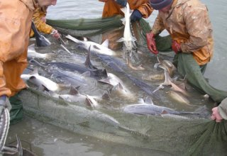 Contract signed in Iran on fish farming