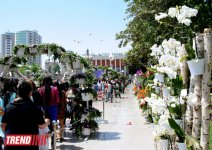Baku hosts Flower Festival (PHOTO) - Gallery Thumbnail