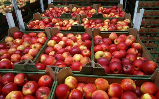 Iran to harvest 7.5M tons of apples, citrus fruits
