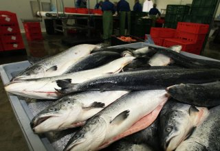 Iran ready to export fish products to Russia