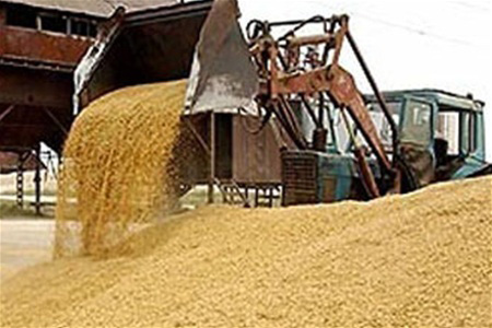 Up to 3.5 million tons of grain gathered in Kazakhstan