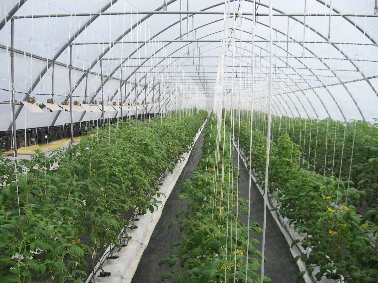 Greenhouse to be built in western Georgia with Japan's financial support