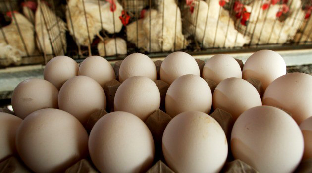 Iran lifts ban on fertilized eggs, chicken import from France