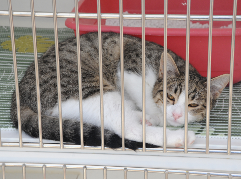Animal housing and treatment center operates in Azerbaijan (PHOTO,VIDEO) - Gallery Image