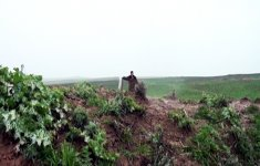 Armenian soldier reveals reasons for surrendering to Azerbaijani side (PHOTO) (VIDEO) - Gallery Thumbnail