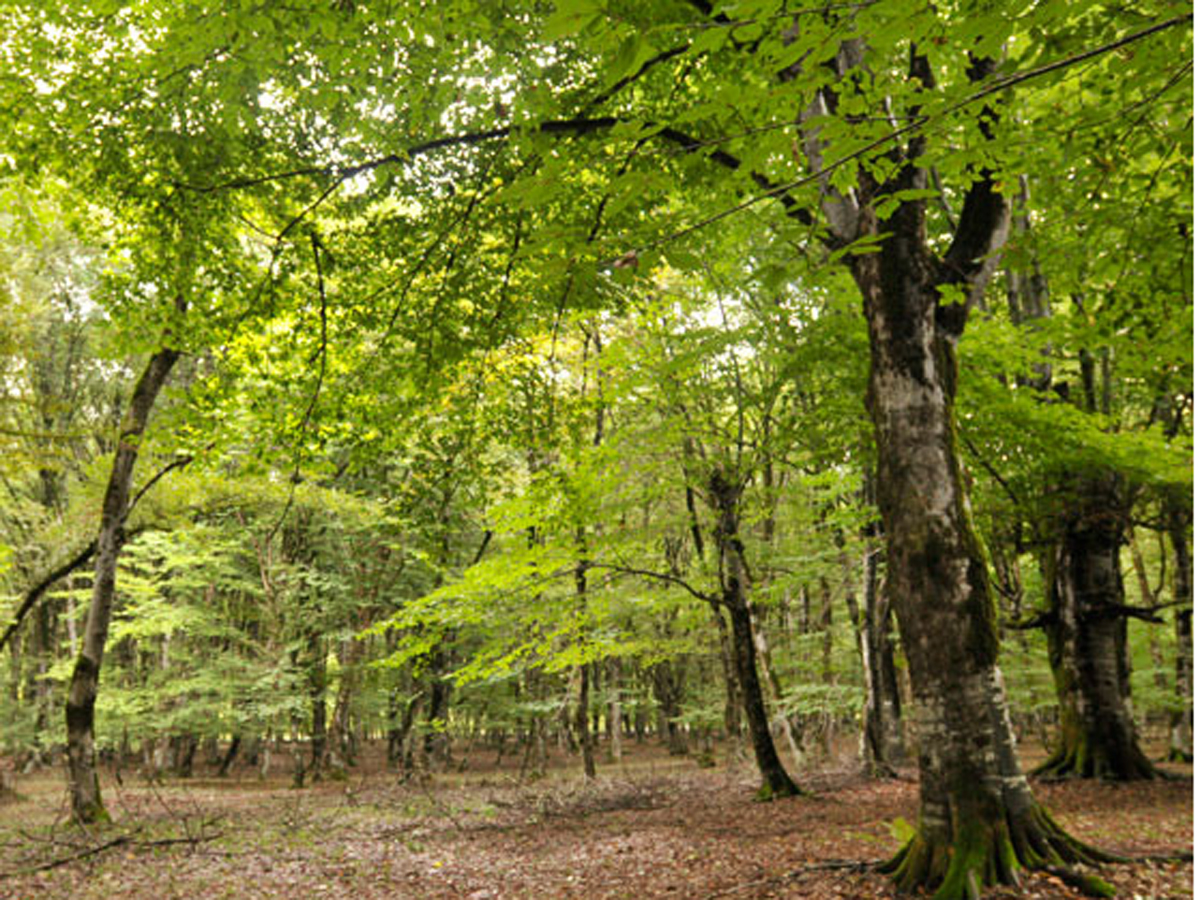 264,000 hectares of forests left in occupied territories, Azerbaijan says