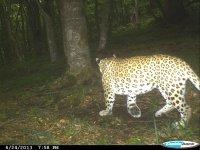 В Азербайджане будет построен карантинный центр для леопардов (ФОТО, ВИДЕО) - Gallery Thumbnail