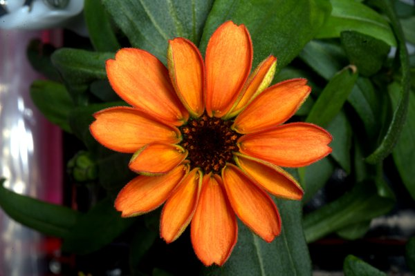 Cosmic flower: first blossom in space on board ISS (PHOTO)
