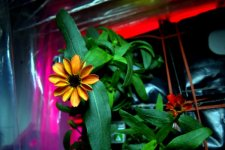 Cosmic flower: first blossom in space on board ISS (PHOTO) - Gallery Thumbnail