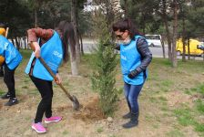 IDEA Bakıda davamlı ağacəkmə aksiyalarına başlayıb (FOTO) - Gallery Thumbnail