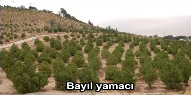 Ekologiya Nazirliyi son 3 ayda 160 mindən çox ağac əkib (FOTO) - Gallery Image