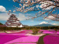 Sakura çiçəkləyərkən... (FOTO) - Gallery Thumbnail