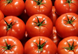 Restrictions imposed by Kazakhstan on import of tomatoes from Azerbaijan - temporary, says Kazakh Ministry