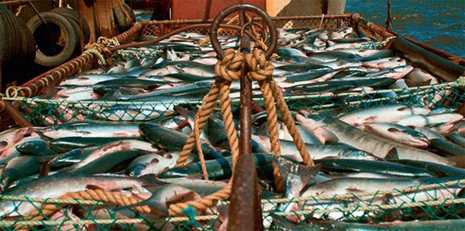 Iran removes ban on fish feed export