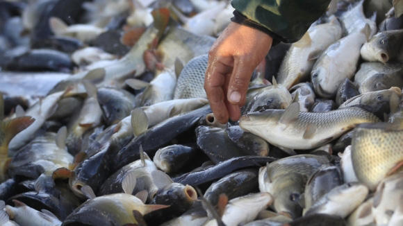 Iran reveals volume of fishery production