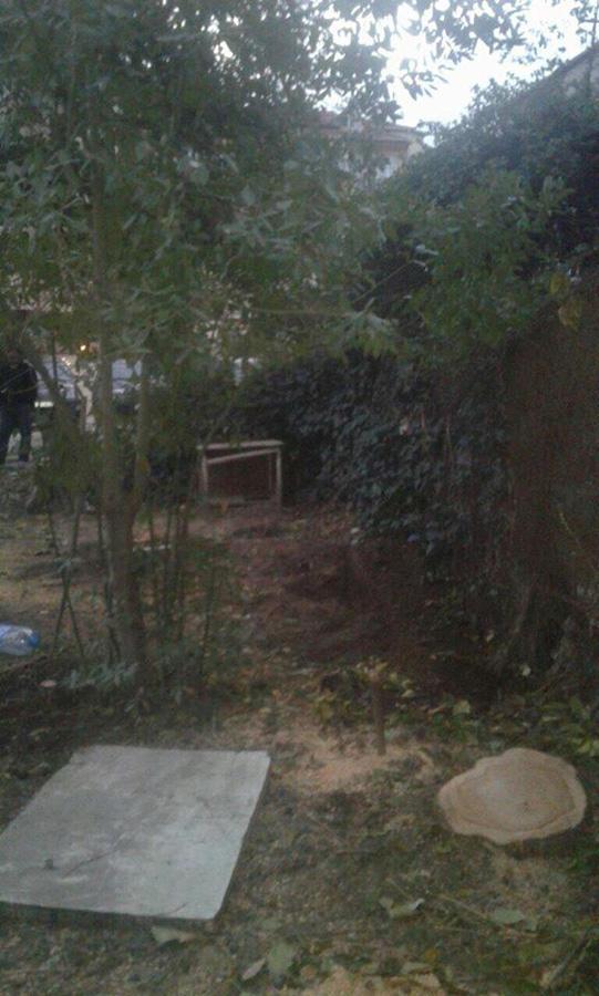 В Наримановском районе Баку восстановлены уничтоженные зеленые насаждения  (ФОТО) - Gallery Image