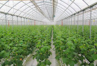 Uzbekistan using energy-efficient tech to build greenhouse complexes