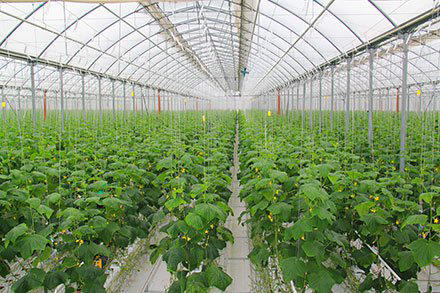 Iran plans to expand greenhouse cultivation