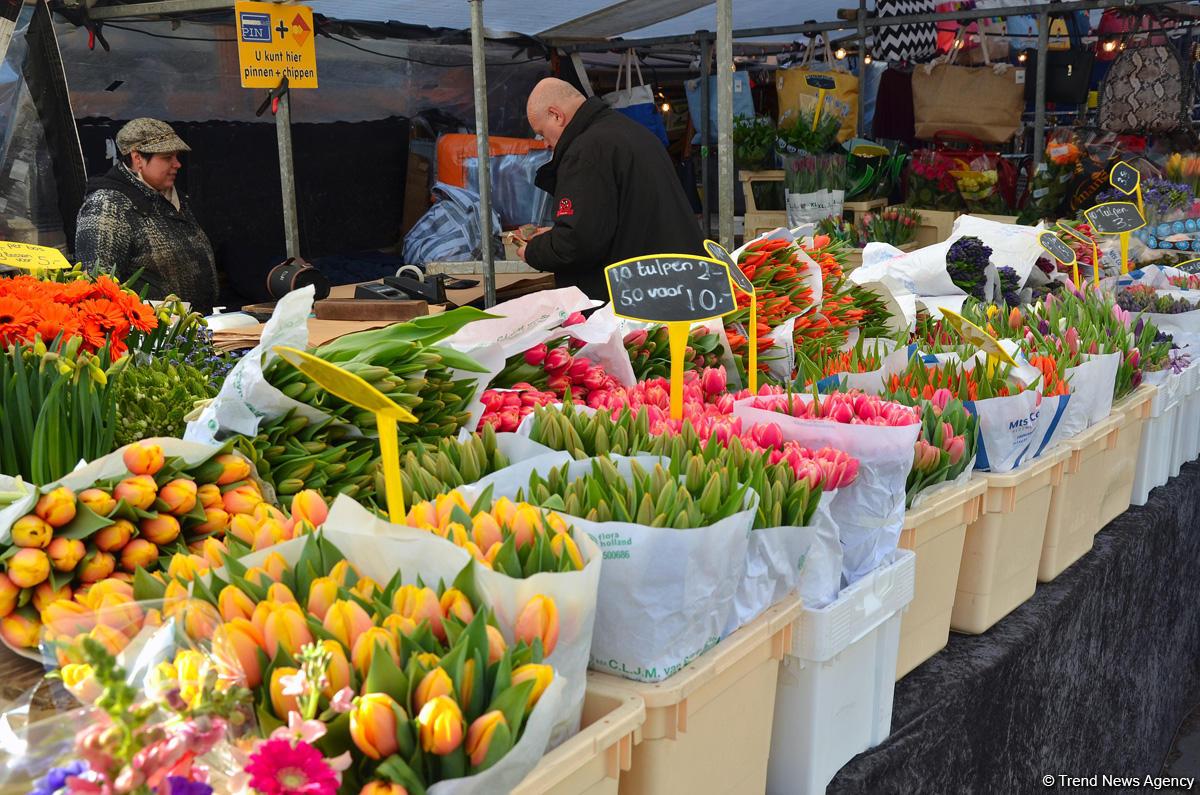 Прогулка по весеннему цветущему Амстердаму (ФОТО) - Gallery Image
