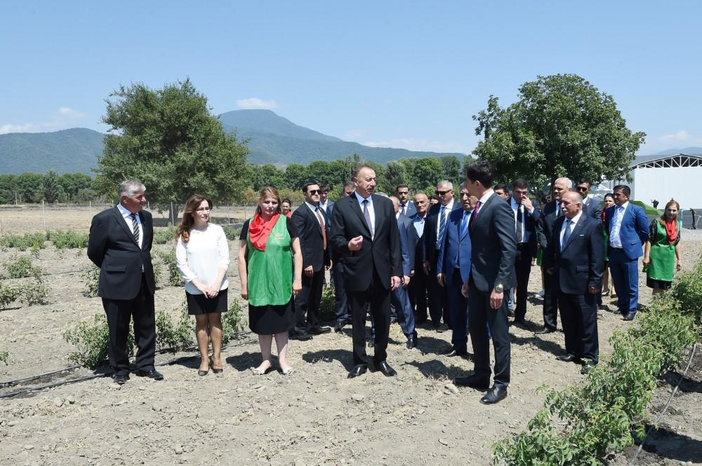 Ilham Aliyev views rose oil plant of AzRose LLC (PHOTO) - Gallery Image