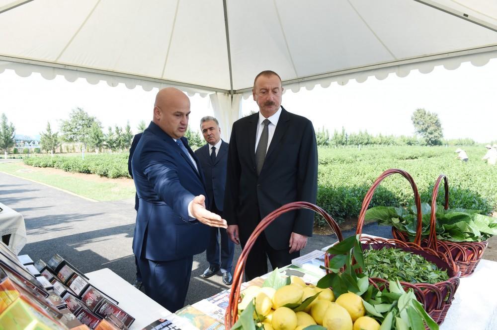 "President Ilham Aliyev views ""Yashil Chay"" plantation in Lankaran (PHOTO) - Gallery Image"