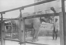 Shooting an Elephant … or a Firing Squad for Dumbo (PHOTO) - Gallery Thumbnail