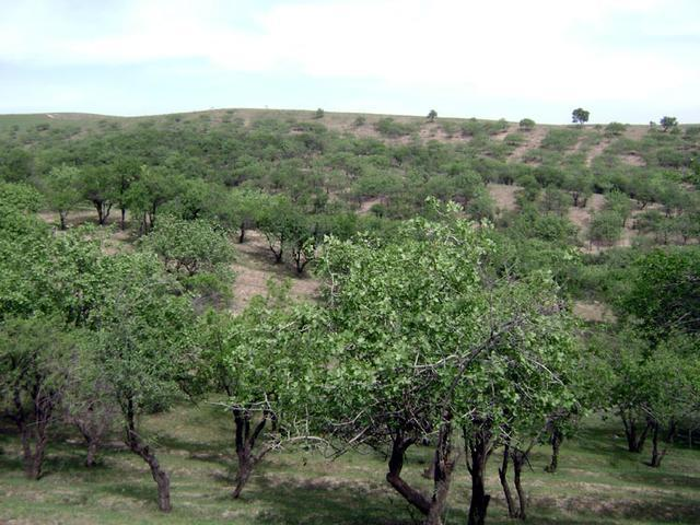 Water shortage poses real risk to Iran's pistachio hub