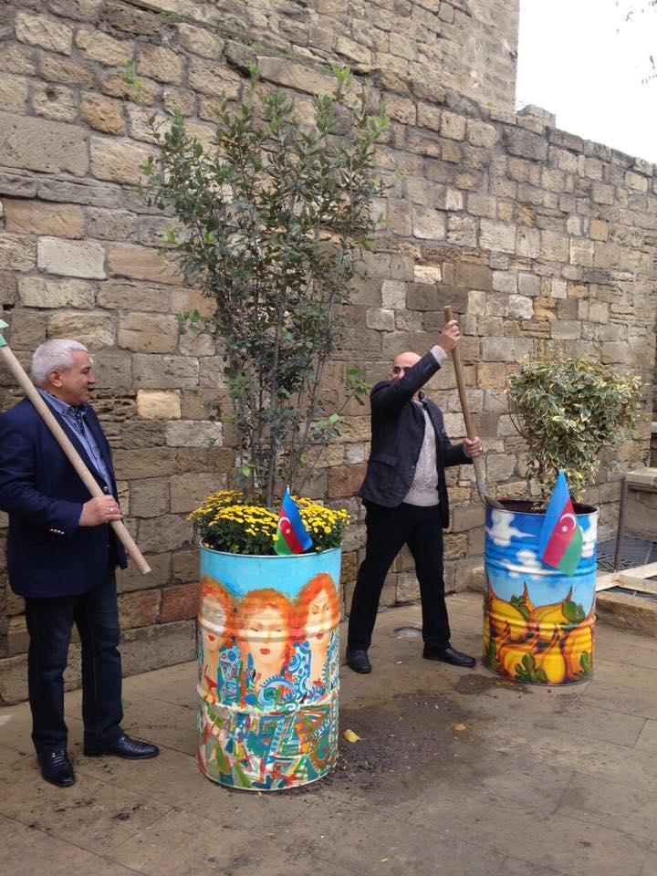 Деревья в расписанных металлических бочках - art-проект в Баку (ФОТО) - Gallery Image