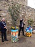 Деревья в расписанных металлических бочках - art-проект в Баку (ФОТО) - Gallery Thumbnail