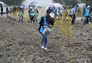 Orchards for low-income families planted in Azerbaijani districts (PHOTO)