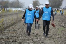 Orchards for low-income families planted in Azerbaijani districts (PHOTO) - Gallery Thumbnail