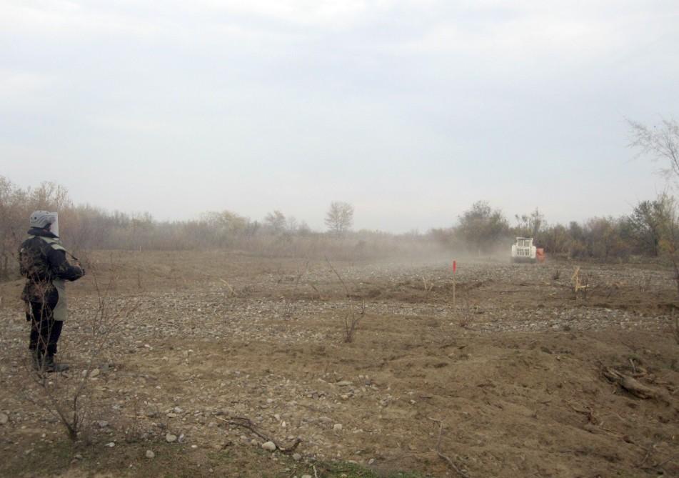 Cocuq Mərcanlıda 28 900 kv.m ərazi tam təmizlənib (FOTO)