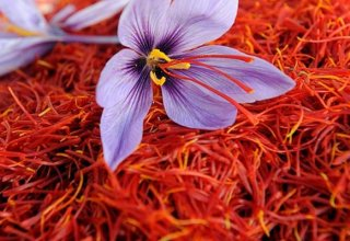 BMB Trade Group and Uzbek Saffron Research Center discuss saffron cultivation and processing
