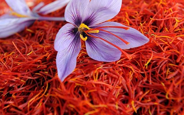 Iran's saffron exports increase