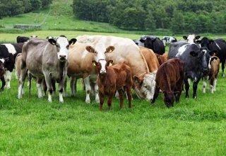 Страны ЕАЭС будут обмениваться информацией о селекционных достижениях в животноводстве